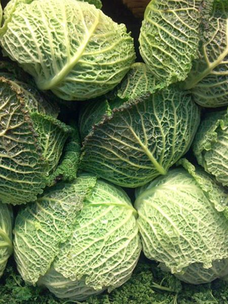 Cabbage 'Endurance'
