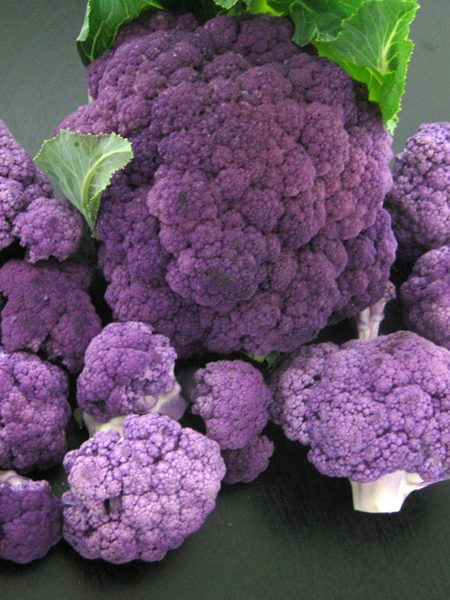 Cauliflower 'Mulberry'