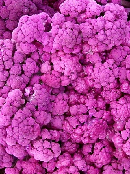 Cauliflower 'Purple of Sicily'