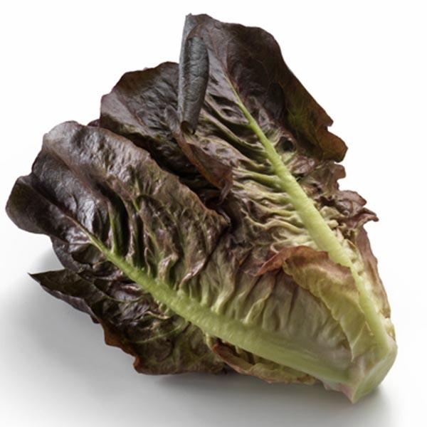 Lettuce 'Intred Ruby' Little Gem