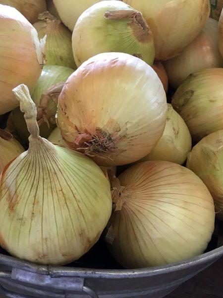 Onion 'Walla Walla'