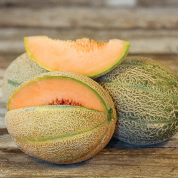 Heirloom Melon 'Hales Best' True Cantaloupe