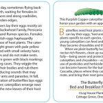 Butterfly 11 - Purplish Copper