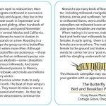 Butterfly Monarchs