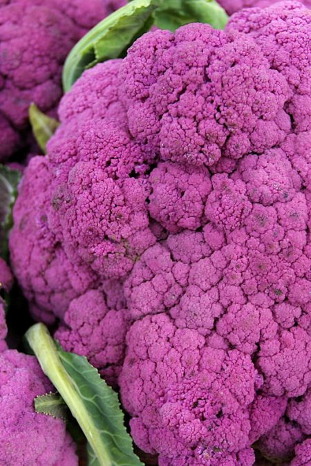 Cauliflower 'Purple Cape'
