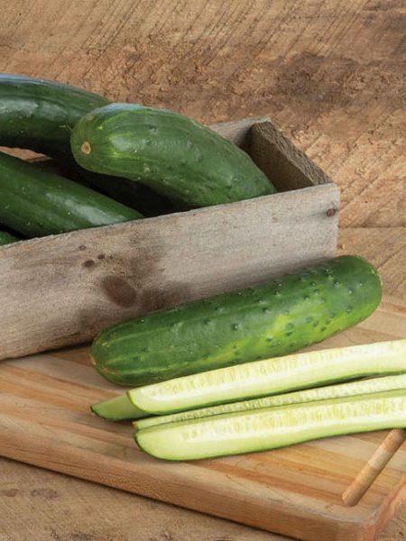 Cucumber 'Bristol' Slicing