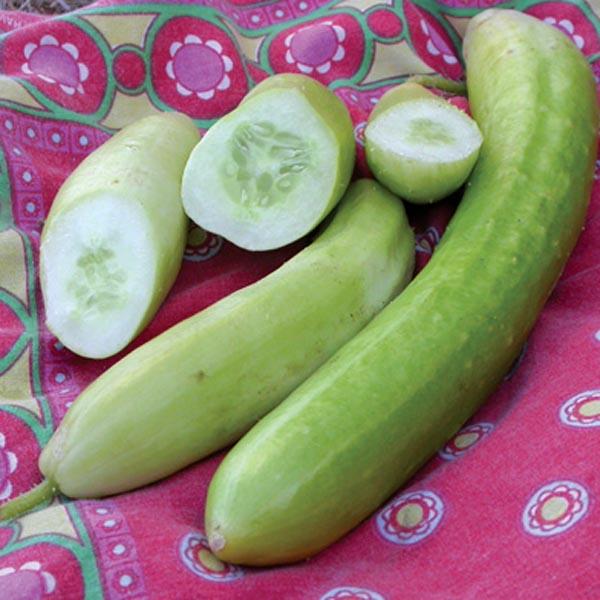 Cucumber 'Lime Crisp' Slicing