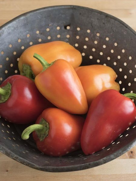 Heirloom Pepper (Sweet) 'Antohi Romanian' Bell