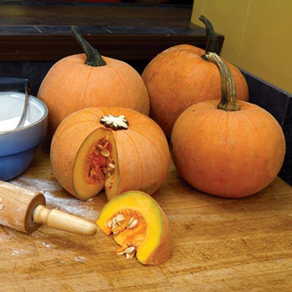 Pumpkin 'Winter Luxury'