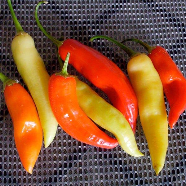 Pepper (Hot) 'Aji Crystal'