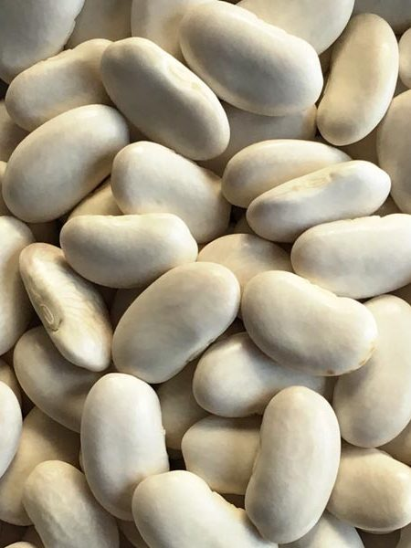Heirloom Bean 'Tarbesque' Runner Snap/Shell Pole Bean