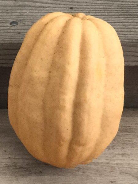 Squash (Winter) 'Baked Potatoes' F1 acorn