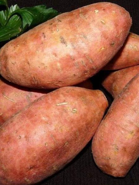 Sweet Potato 'Burgundy'