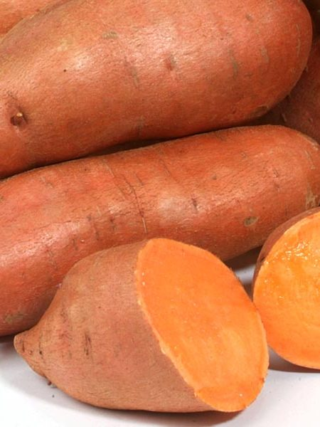 Sweet Potato 'Orleans'