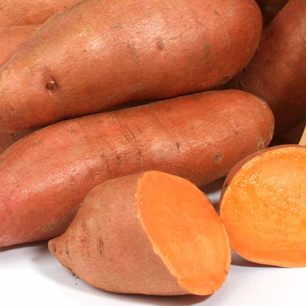Sweet Potato 'Orleans'