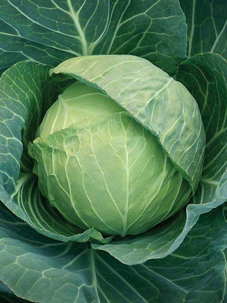 Cabbage 'Headstart' F1
