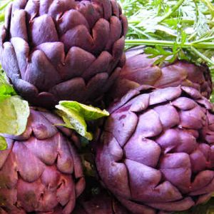 Artichoke 'Violetto Purple'