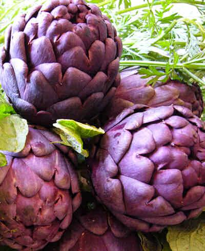 Artichoke 'Violetto Purple'