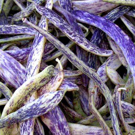 Heirloom Bean 'Dragon Tongue' Fresh/Dry Shell Bean