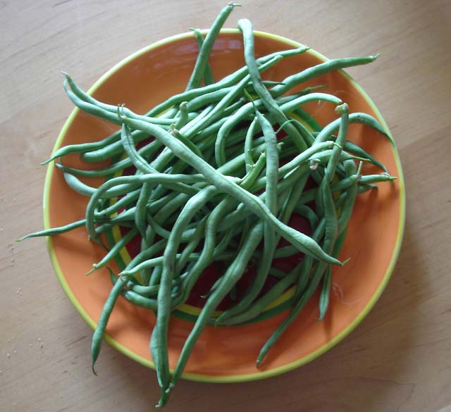Heirloom Bean 'Fortex' Snap Pole Bean