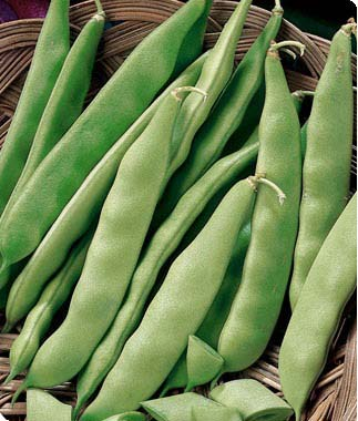 Heirloom Bean 'Kentucky Wonder Bush' Snap Bush Bean