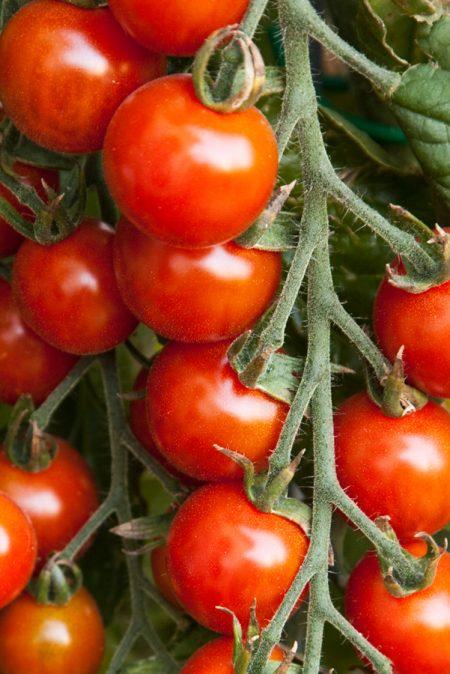 Tomato 'Cherry Buzz' Cherry Tomato