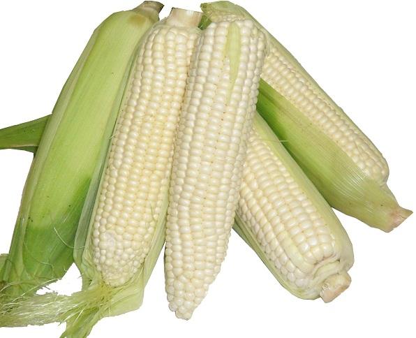 Corn 'White Out' White