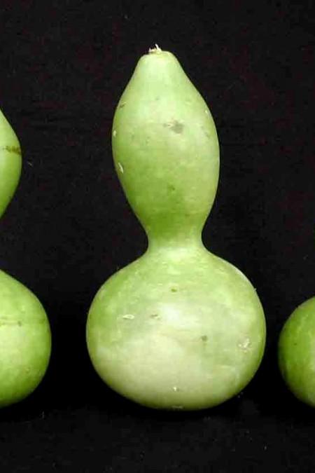 Decorative Gourd 'Birdhouse Bottle' Large Gourd