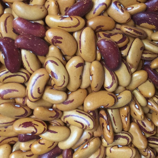 Heirloom Bean 'Tiger's Eye' Fresh/Dry Shell Bean