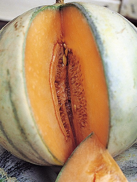 Heirloom Melon 'Charentais' True Cantaloupe