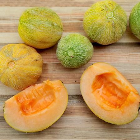 Melon 'Minnesota Midget' Cantaloupe