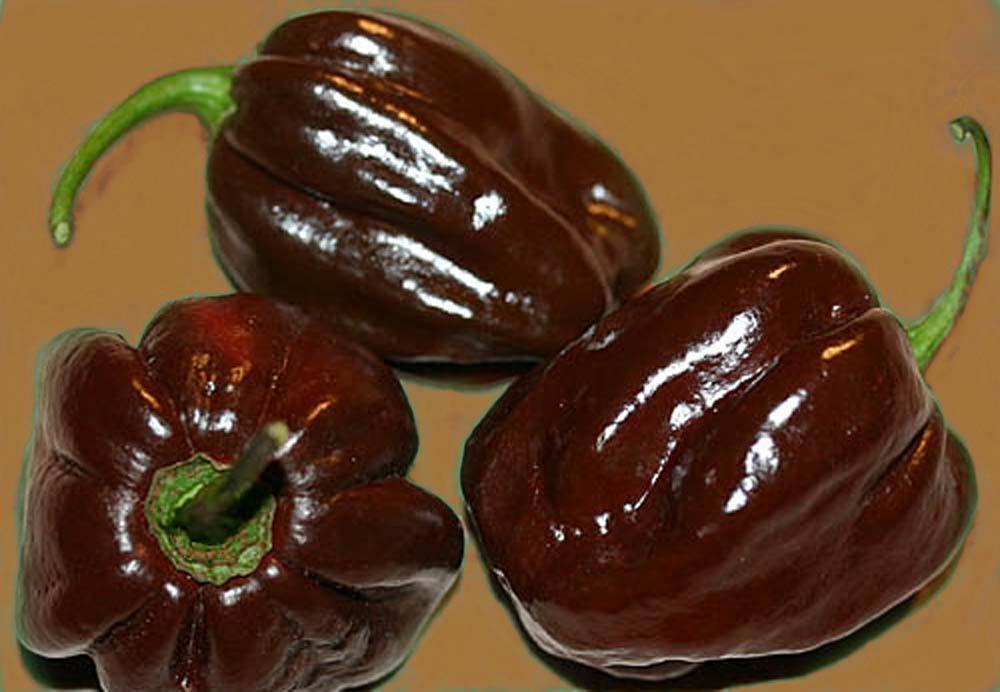 Heirloom Pepper (Hot) 'Chocolate Habanero'