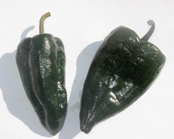 Pepper (Hot) 'Poblano'