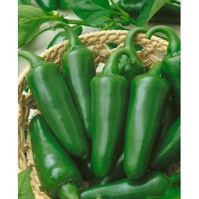 Pepper (Hot) 'Tam Jalapeno'