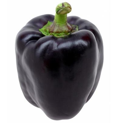 Pepper (Sweet) 'Purple Beauty' Bell