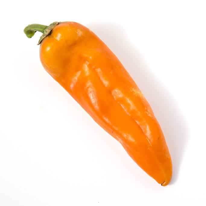Heirloom Pepper (Sweet) 'Golden Treasure'