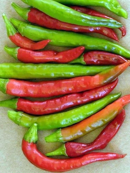 Pepper (Hot) 'Thai Dragon'