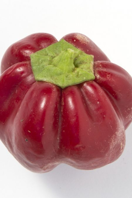 Heirloom Pepper (Sweet) 'Ruby King' Bell