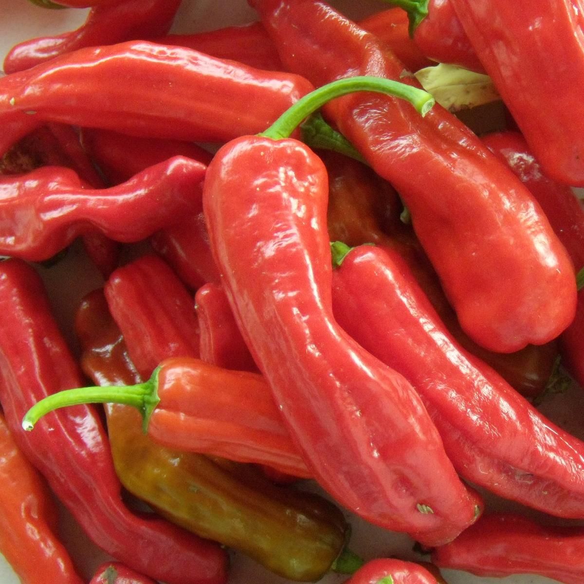 Heirloom Pepper (Sweet) 'Corno di Toro Red'