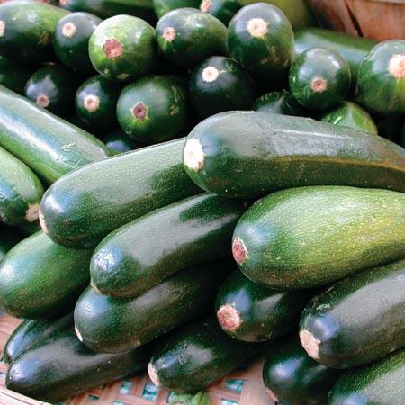 Squash (Summer) 'Black Beauty' Zucchini
