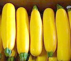 Squash (Summer) 'Golden Zebra' Zucchini