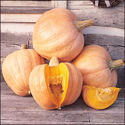 Heirloom Squash 'Amish Pie' Pumpkin