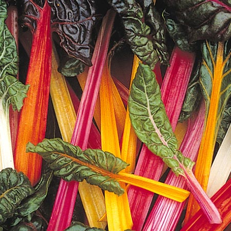 Swiss Chard 'Aurora Mix'