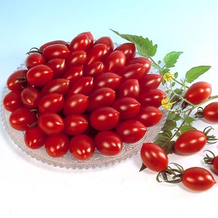 Tomato 'Sugary' Cherry Tomato