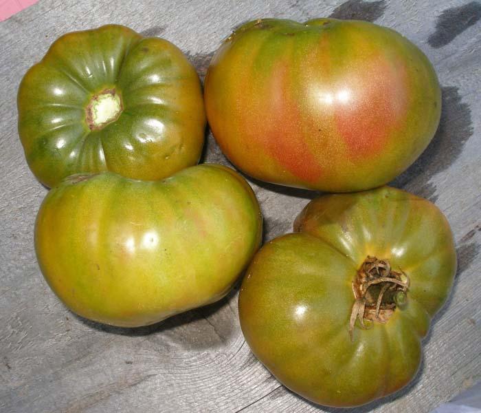Heirloom Tomato 'Ananas Noire'
