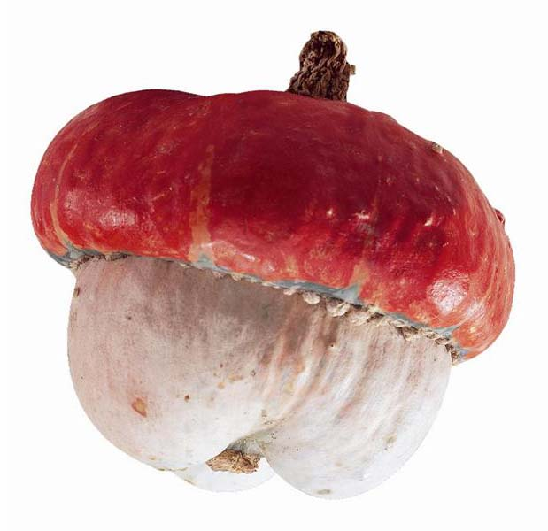 Decorative Gourd 'Mini Red Turban' Small Gourd