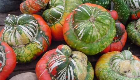 Decorative Gourd 'Turk's Turban' Large Gourd