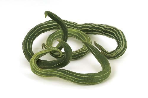 Cucumber 'Painted Serpent' Armenian Striped