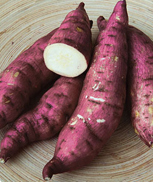 Sweet Potato 'Murasaki Purple'