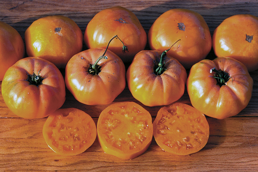 Heirloom Tomato 'Dr. Wyche's Yellow'